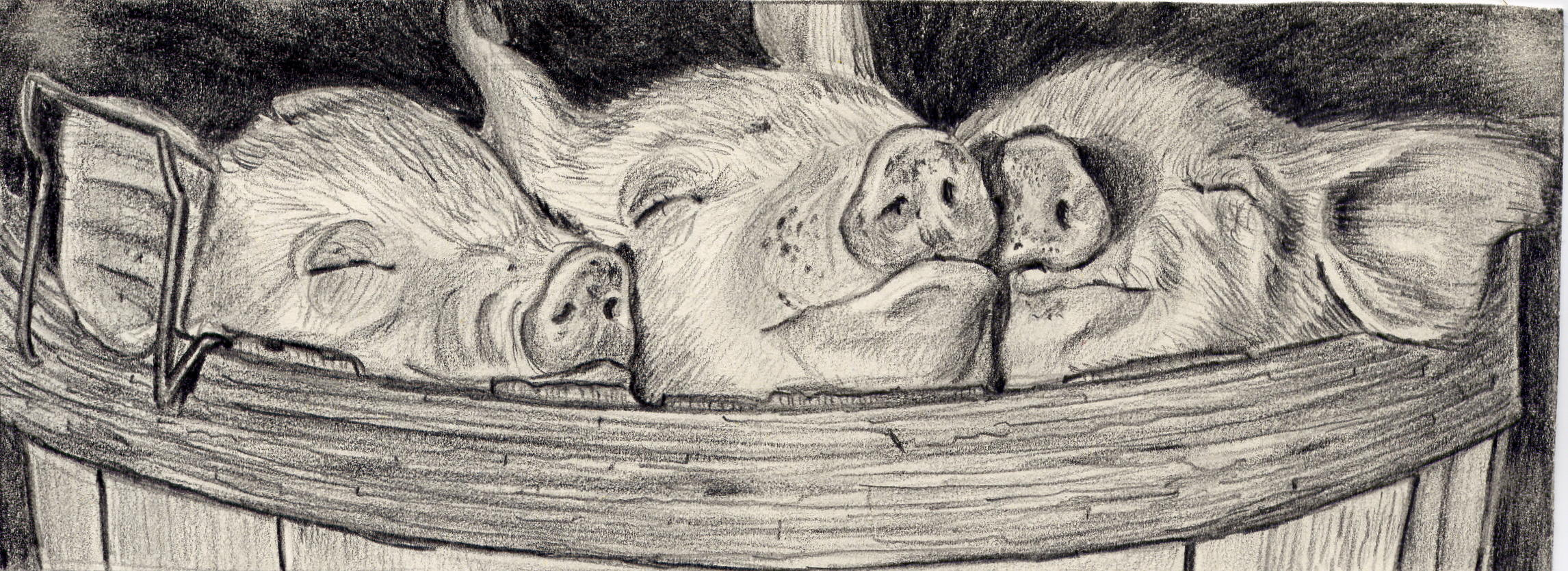 three_little_pigs.jpg